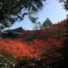 🍁 ① まだ間に合うかな…紅葉 秋の京都