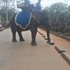 【カンボジア女子一人旅】遺跡の間を優雅に歩く象乗り体験♪♪