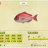 【あつ森】「タイ(鯛)」の出現時期・場所・時間帯情報まとめ【あつまれどうぶつの森】
