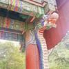 天然記念物の銀杏の木を見に龍門寺に。