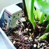 植物を育てるにはSの人が向いてる説