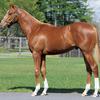 シルク2020 1歳出資愛馬たち。今年は5頭(ルミナスグルーヴの19、サマーハの19、ラトーナの19、ミスティックリップスの19、パーシステントリーの19)