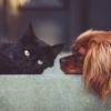 ペット禁止の賃貸でペットを飼育する方法!NG範囲を理解すれば飼育の可能性大!!