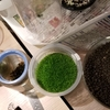 水草のミスト式栽培&水上栽培の実験!