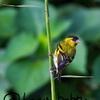 野鳥写真を撮り始めたばかりの野鳥撮影初心者が中級者になるための考え方