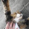 9月後半の #ねこ #cat #猫 その1