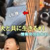 犬達の応援ブログ始めました