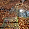 落ち葉の中の木道を歩く