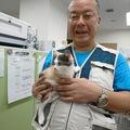 【スコティッシュフォールド♀3カ月キャリコ】をアイドル狂医師が54才で初めて猫を飼う。縫いぐるみでない温かく柔らかい生き物を死ぬまで面倒を見ましょう。