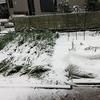 3月最後の週末は雪 お豆はだいじょうぶ?