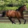【父:サトノダイヤモンド】2021年度キャロットクラブ募集確定馬の種牡馬別評価⑨【一口馬主】