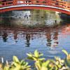 山茶花咲く冬の神泉苑