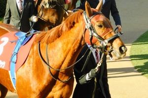 【競馬ブログ】「気まぐれウマ放談」牝馬戦線の最前線へ GⅠ馬の意地~エリザベス女王杯