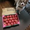 毎年のトマト