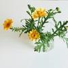 春菊の花束