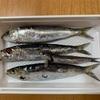 タチウオ釣りの餌作り