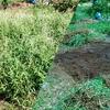 家庭菜園・市民農園の初心者の大敵・雑草!どう処理する?私なりの4つの方法