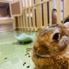 ウサギのちまき久しぶりにぶちまける!