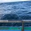3月11日 カブラ 釣り