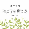 【エケベリア】ミニマの育て方と特徴!肥料や植え替え方法は?