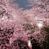 夜の目黒川、桜並木