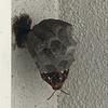 磐田市でベランダにできた蜂の巣を駆除!ボコボコ壁は巣を作られやすいから気を付けて!