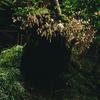 Soundscape001: Rainy Forest