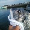 清水 清開 紀州釣り 内側での挑戦
