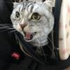 通院(猫の甲状腺機能亢進症)