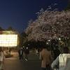 3月の桜 2