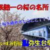 《駅探訪》【相鉄】桜の名所としても知られる谷間の駅、いずみ野線弥生台駅