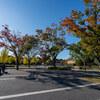 昭和記念公園 並木道