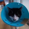 猫が退院した