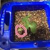2つ目のアサガオの芽が出た