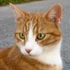 【猫版】ハナちゃんの動物病院 Complete① ~猫の診察記だったり、闘病記だったり~