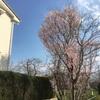 桜とか その2