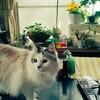 猫にギュッとしてチュッとして。