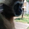 釜山 子連れ旅行にオススメのスポット釜山三晶動物園(チルドレンパーク)をご紹介