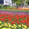 チューリップ咲き誇る横浜公園