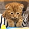 【注目】猫がいる部屋にウェブカメラを設置したので見てほしい