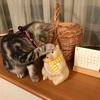 どんよりとした1日・・・モチベーションが上がらない日は、猫から癒しをもらおう。。