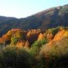 山麓は秋色ー稜線は冬色