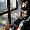 2006年11月 冬の日差しの中でお昼寝するにゃんこたち