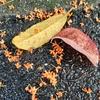 「葉っぱのフレディの季節が来たで」。