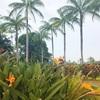 ハワイ島旅行記⑩ Magic Sand Beachとドトールコーヒー農園Mauka Meadows【コナコーヒーの試飲が出来る】