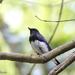オオルリとヤマガラキッズと環境保護