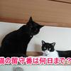猫は留守番が寂しい?何日まで大丈夫?