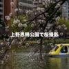 東京で桜が満開!というわけで、上野恩賜公園に桜撮影に行ってきました。
