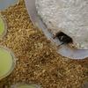 ニジイロ菌糸ビン産卵セット