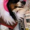 阿見プレミアムアウトレットで愛犬とショッピング